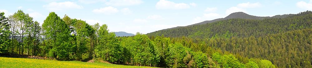 היער הבווארי