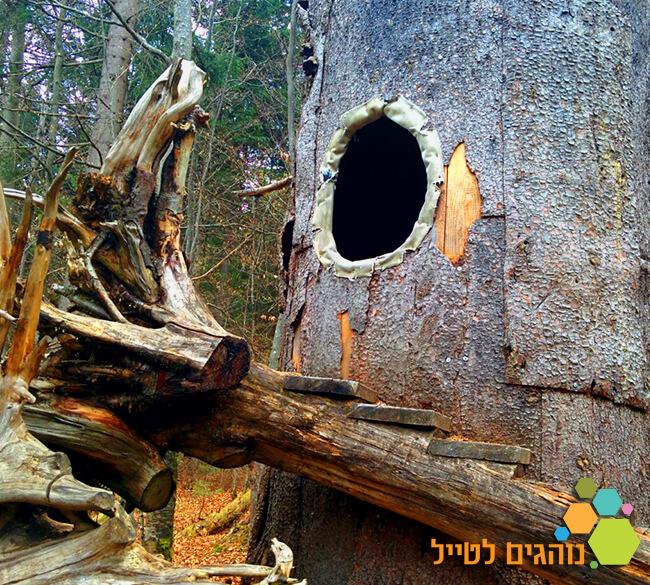 ניווט ביער הבווארי