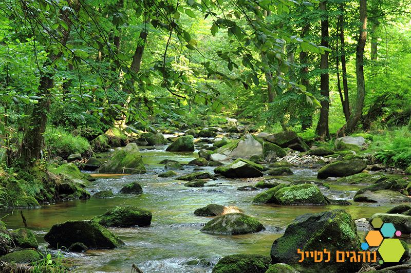 מסלול הליכה ביער הבווארי