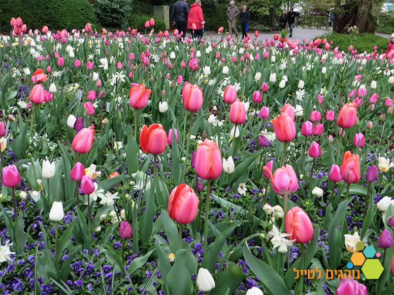 פרחים לילדים באירופה
