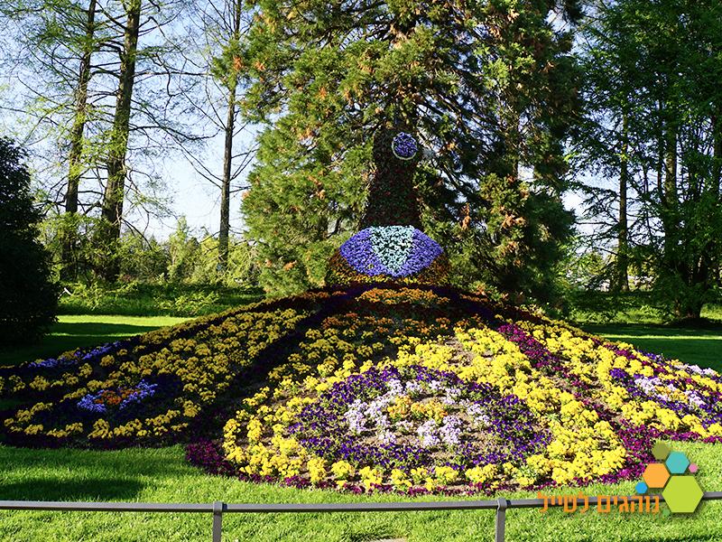 פרחים ופרפרים שייט